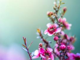 20 Tumblr Flower s  FreeCreatives Clipart Backgrounds