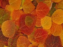 2560x1600 Fall Leaves Desktop PC and Mac Frame Backgrounds