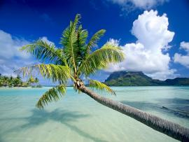 30 HD Tropical Beach image Backgrounds