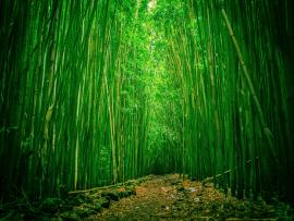 Amazing Bamboo Frame Backgrounds