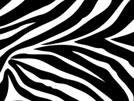 And White Zebra Print Wall Border  & Border    Clip Art Backgrounds