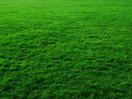 Animated Grass If You Need Grass Download Backgrounds