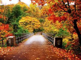 Autumn  Autumn (35867750)  Fanpop Picture Backgrounds