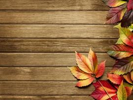 Autumn Art Autumn Top Autumn   Template Backgrounds