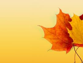 Autumn Frame Backgrounds