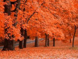Autumn Hds Autumn Hd   Clip Art Backgrounds