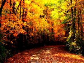 Autumn Images Autumn HD and Photos   Clip Art Backgrounds