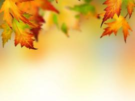 Autumn Leaf Border Design Backgrounds