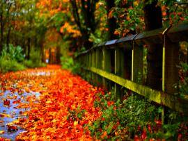 Autumn Leaves  Hds Download Backgrounds