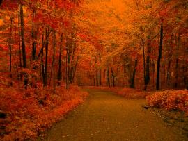 Autumn Leaves and Codes For Twitter Friendster Xanga Or   Clipart Backgrounds