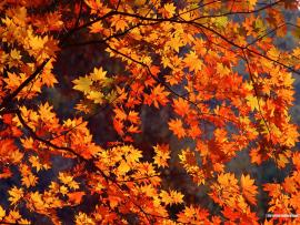 Autumn Tints Backgrounds