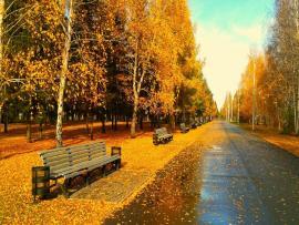 Autumns  Bests image Backgrounds