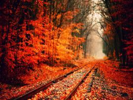 Autumns  Bests Photo Backgrounds
