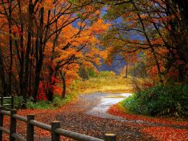 Autumns Bests Art Backgrounds