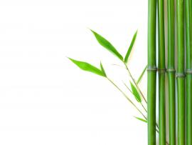 Bamboo Graphic Quality Backgrounds