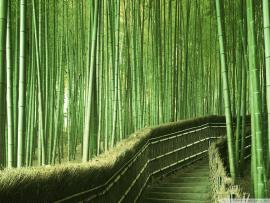 Bamboo Hd Template Backgrounds