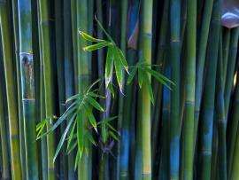 Bamboo Photo Backgrounds