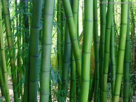 Bamboo Quality Backgrounds