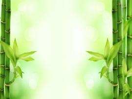 Bamboo Strength PowerPoint Template Wallpaper Backgrounds
