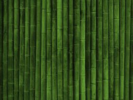 Bamboo Textures image Backgrounds