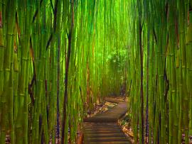 Bamboo Tree Photo Backgrounds
