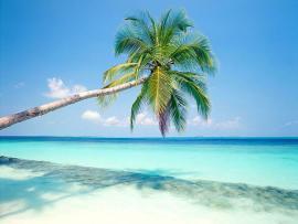 Beach Sky Palm Trees Frame Backgrounds