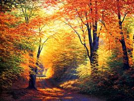 Beautiful Autumn Seasons HD  Nices Clipart Backgrounds