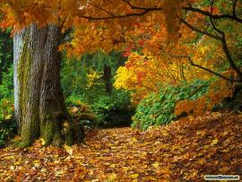 Beautiful Autumn Seasons HD  Nices Photo Backgrounds