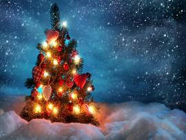 Beautiful Christmas Trees  HDs Quality Backgrounds