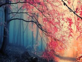Beautiful Forest HD 5025  HDs Site Download Backgrounds