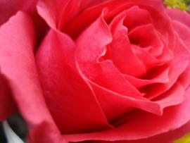 Beautiful Rose Flower Backgrounds