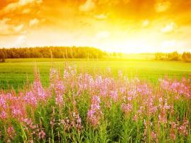 Beautiful Summer Design Backgrounds