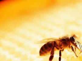 Best Images About Bee Slides Backgrounds
