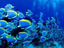 Best Underwater Hd Backgrounds