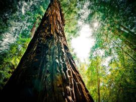 Big Trees Frame Backgrounds
