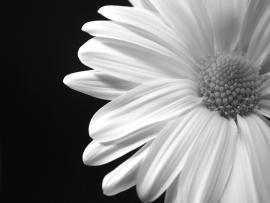 Black N White Flower Frame Backgrounds