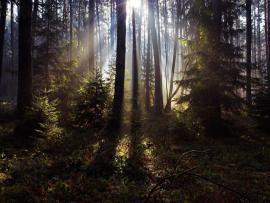 Black Woods Clipart Backgrounds