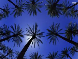 Blue Palm Tree Wallpaper Backgrounds