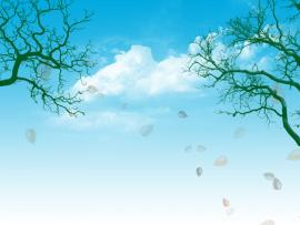Blue Sky and Trees PowerPoint  PPT Photo Backgrounds