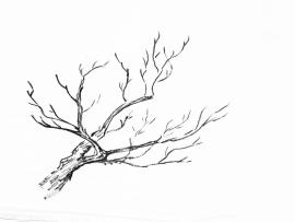 Branches Art Backgrounds