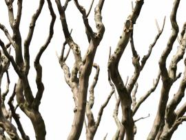 Branches Backgrounds