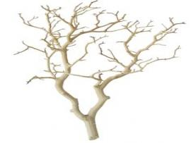 Branches Quality Backgrounds