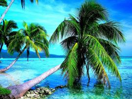 Breath Taking Nature Palm Tree Backgrounds