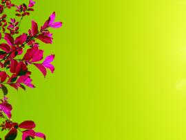 Bright Pink Flowers Green  Photo Backgrounds