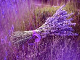Bundle Lavender Photo Backgrounds