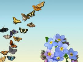 Butterflies Backgrounds