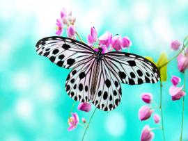Butterfly  Best HD Slides Backgrounds