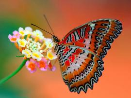 Butterfly Art Backgrounds