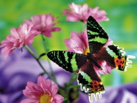 Butterfly With Flowers Graphic Backgrounds