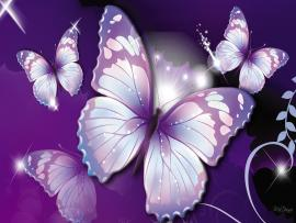 Butterflys  Bests Art Backgrounds